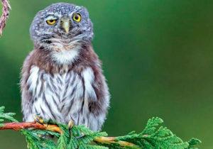 Las mejores fotos de animales de los Premios Comedy Wildlife