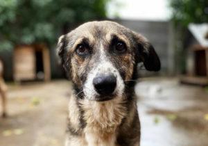 Adopción responsable de mascotas: claves a tener en cuenta