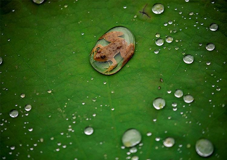Encontraron  en Chile una rana que se creía desaparecida por décadas