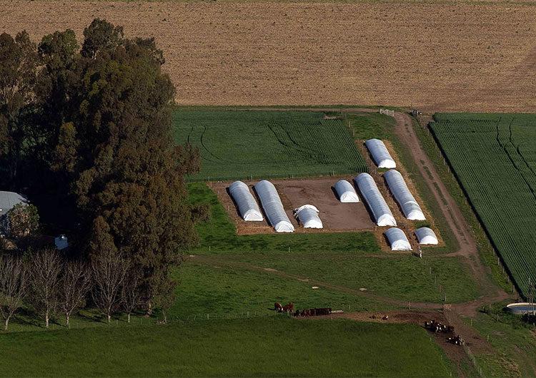 Boletín oficial: formalizaron la baja de retenciones a la soja