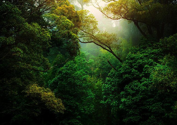 Día Mundial de la Protección de la Naturaleza: Defenderla es tarea de todos