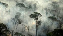 Según un estudio, la falta de protección medioambiental desencadenará pandemias…