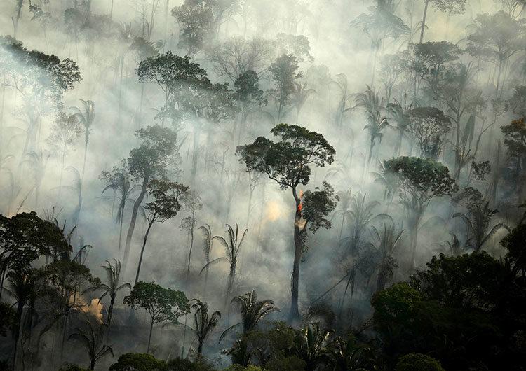 Alarma en la selva amazónica brasileña: récord de incendios en octubre