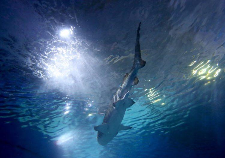 Australia tuvo récord de ataques de tiburones en más de 90 años