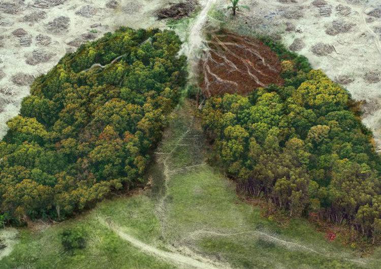 Huella ecológica: conoce qué es y cómo calcularla