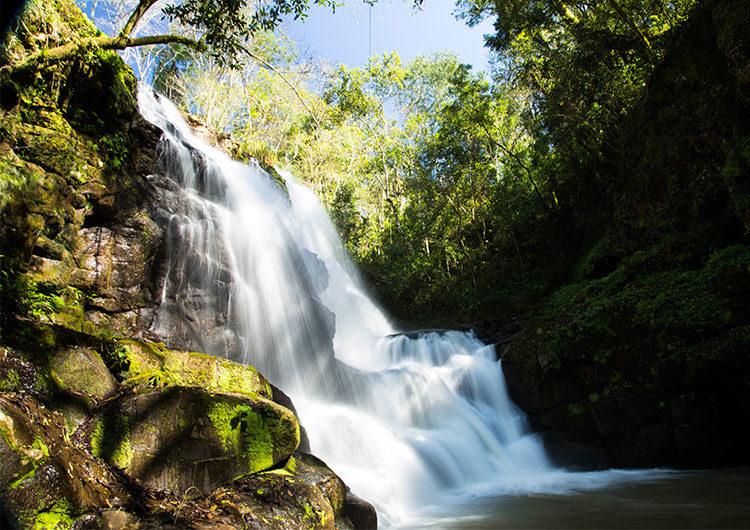 """""""Mesopotamia trip"""": 4 opciones para adentrarse en la Selva Misionera y los Esteros del Iberá"""