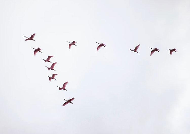 Birdwatching: 5 destinos ideales para la Observación de Aves
