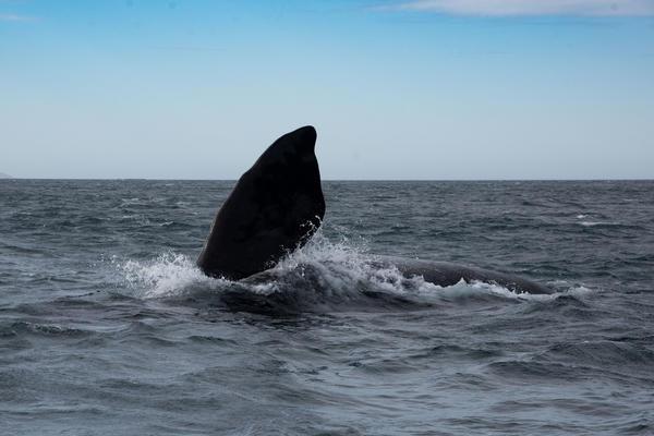 La importancia del mar Argentino