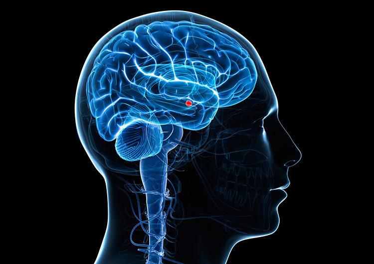 ¿Cómo afecta el coronavirus al cerebro?