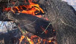 Nuevos focos de incendio en las islas del Paraná