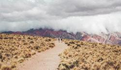 Proyectan la plantación de 30.000 árboles nativos en la Quebrada…