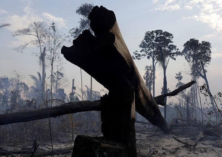Dos tercios de bosque tropical destruidos o dañados en todo el mundo