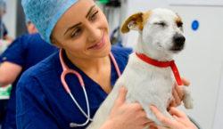 Se desarrolló la vacuna COVID para animales y se lanzará…