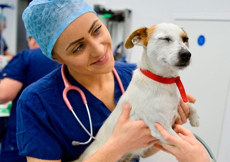 Se desarrolló la vacuna COVID para animales y se lanzará en abril