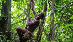 Áreas naturales protegidas provocarán 300 millones de indígenas desplazados: Survival…