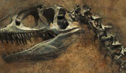 Estudio asegura que dinosaurios también hibernaban y vivían en el…