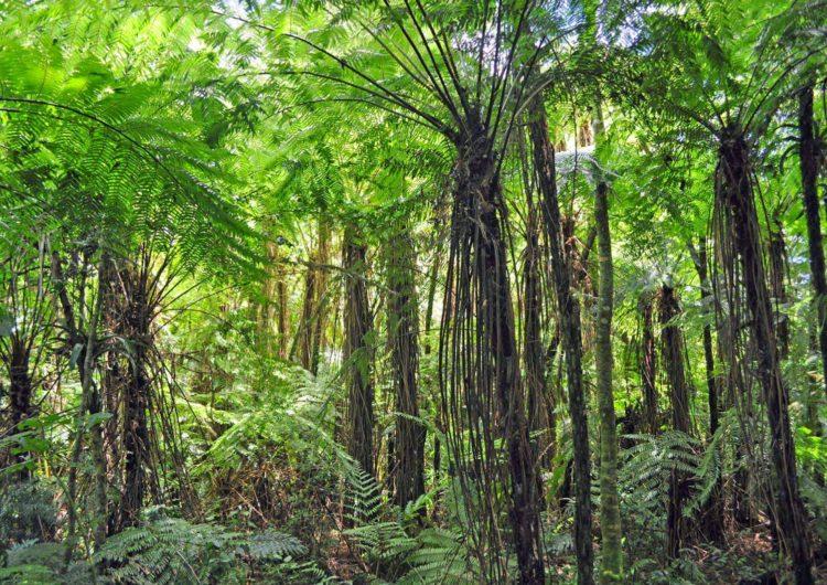 Ecología de Misiones sumó 5 nuevas reservas al sistema de áreas naturales protegidas