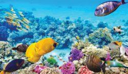 La Unesco no incluirá a la Gran Barrera de Coral…