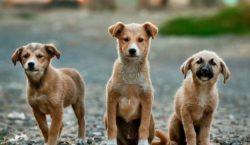 Se celebra el Día Mundial del Perro y se concientiza…