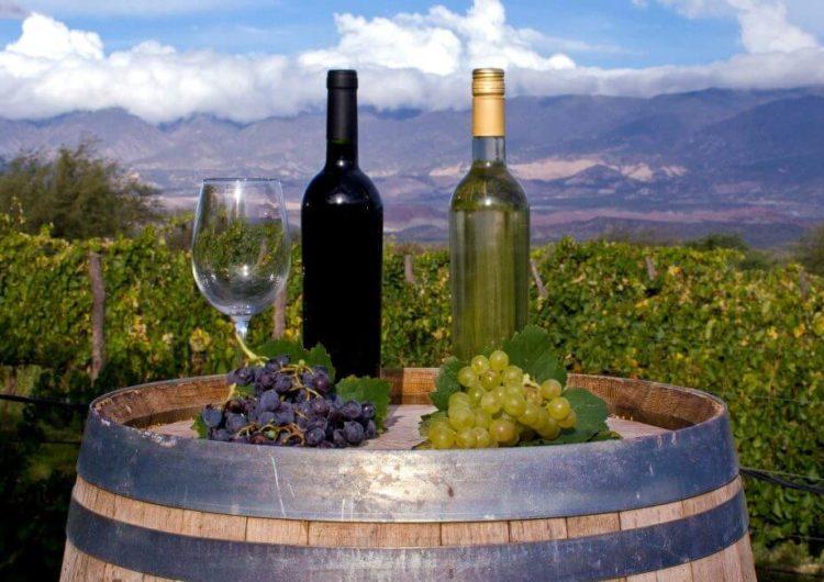 Tucumán propone un Camino del Vino con 14 bodegas a lo largo de 100 kilómetros
